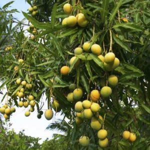 Buy plants online in Bangalore | Bangalore Agrico