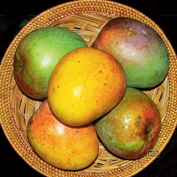 Due to high demand of original Ratnagiri alphonso mangoes, there are to much bulk order and food mall enquiries coming!!!! So we require good investor to invest .
