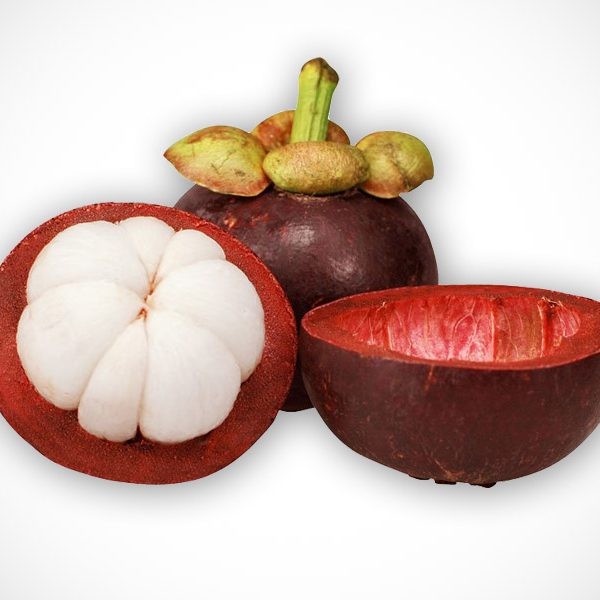 MANGOSTEEN FRUIT IMPORTED – LIVE PLANT – ALL CLIMATE