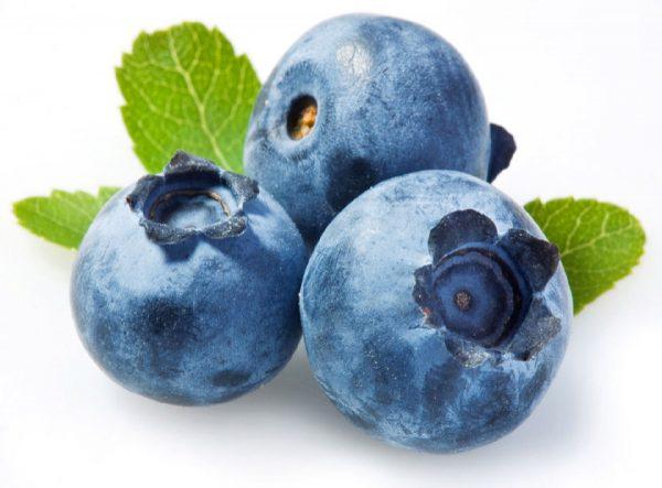 blueberry plantslive