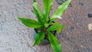 buy-clove-online-india-bangalore-agrico