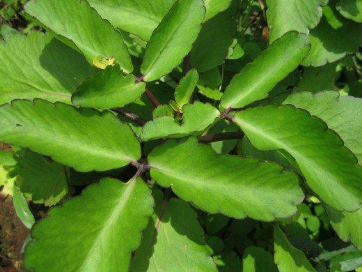 Green Witch Herb Garden